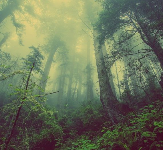 Photographing mystical forest pictures